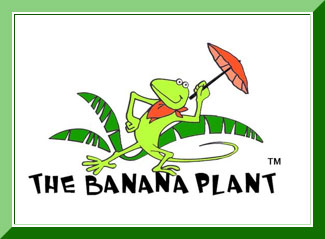 the banana plant gulfalive